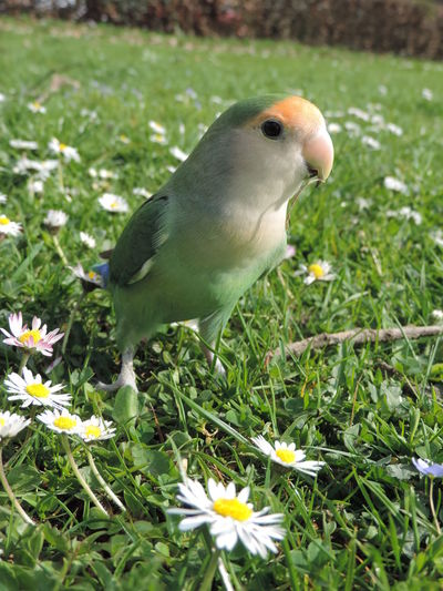 Animal Themes Bird Close-up Day Grass Green Color Nature No People One Animal Outdoors