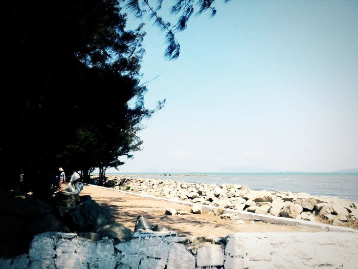 This place brings all my memories back, Can Gio Beach Life Is A Beach Tree And Sky Bluesky Rocks Cangio Taking Photos Summer Memories...