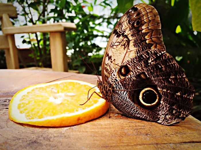 Butterfly Farm Butterfly - Insect Butterflyfarm Orange Eat Eating Animals Animal Animals In The Wild Insect Wood Day Delicious Delicious ♡ No People Table Focus On Foreground Animal Themes
