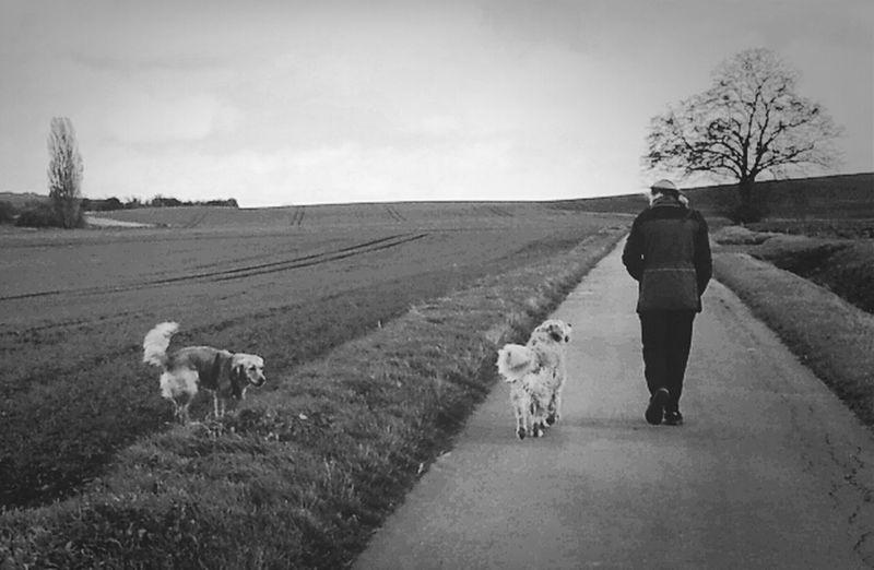 Dog Dogwalk My