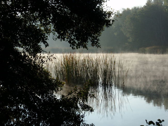 Fog on the river Beauty In Nature Branch Calm Day Fog Foggy Growing Growth Lake Lakeside Majestic Nature No People Non-urban Scene Plant Reflection Scenics Sky Standing Water Tranquil Scene Tranquility Tree Treelined Water Waterfront