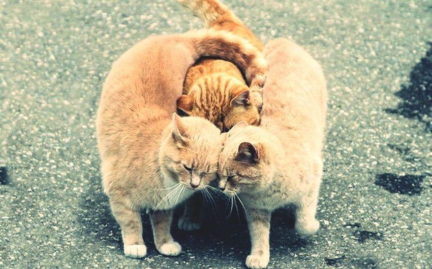 Cat♡ I Love My Cat Animal Photography Cute Pets Cat Hug So Adorable ☺ Roux