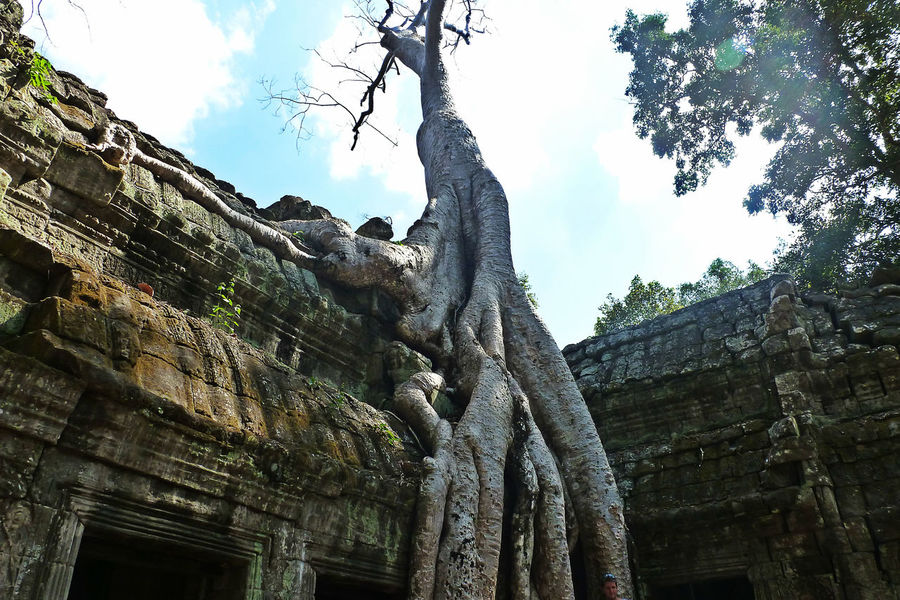 Ancient Ancient Architecture Ancient Civilization Ancient Ruins Angkor Eyeem Cambodia Khmer Empire Low Angle View Nature Taking Over Nature Taking Over Again No People Old Ruin Shooting Location Ta Prohm Tetrameles Tomb Raider  Tomb Raider Temple Travel Destinations