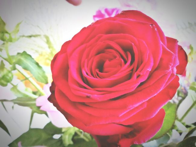 Springtime Roses Are Red The Sky Is Blue I Love You ! 🌹♥