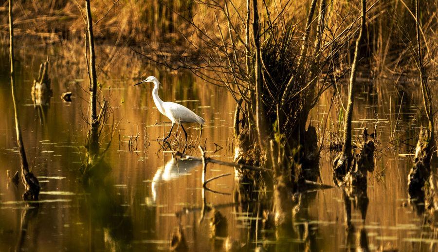 Birds perching on a lake