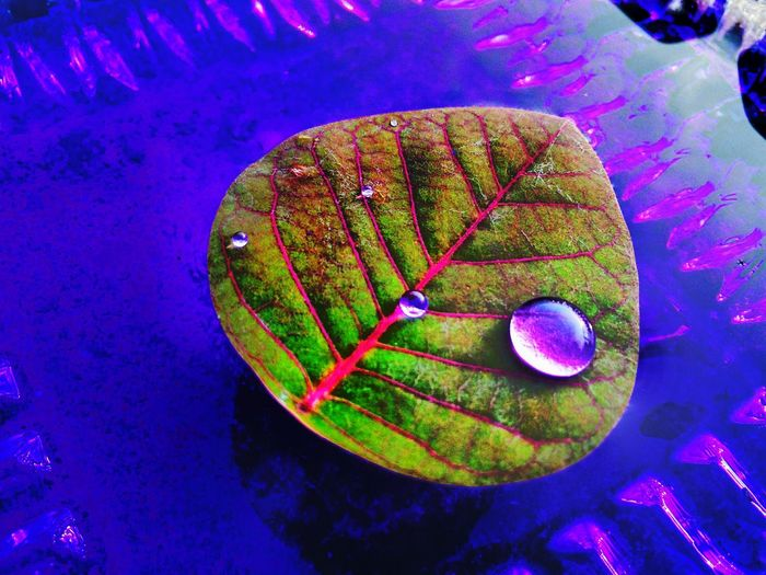 Mobilephotography Leaves_collection Purple Water Drops Nature_perfection Nature With Human Taking Photos Darkness And Light Nature Creates Such Amazing Detail Playing With Filters Colours Of Life EyeEm Best Edits Closeupshot EyeEm Masterclass Imperfection Is Beauty Colour Drops Leaf Veins