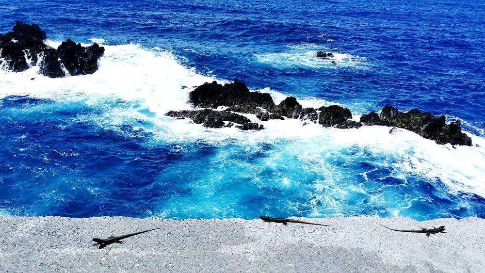 Rocks Madeira Island Samsung Galaxy Note 3 Beutiful :) World Ocean View Wellcome Sun Nature Reptiles Nature's Diversities