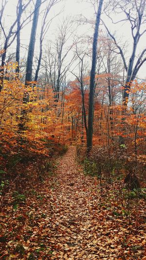 New Years Resolutions 2016 Hiking Biking Get Outside Love Nature Relax Find Myself Nature Therapy Be Happy Be Free Let Go Of The Past Be At Peace Explore Mountain Biking Trail Nature Outdoors Leaves Trees Orange Leaves