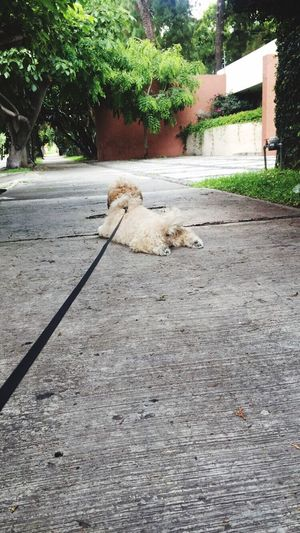Hereweare Mylovedog Summer Vibes