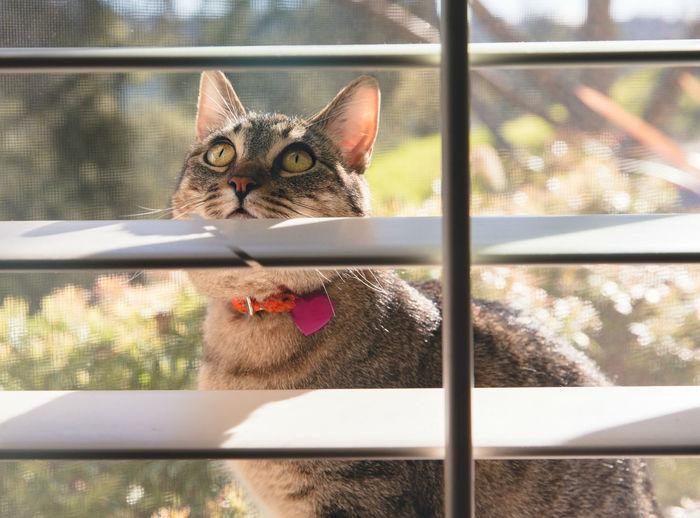 Portrait of cat in window