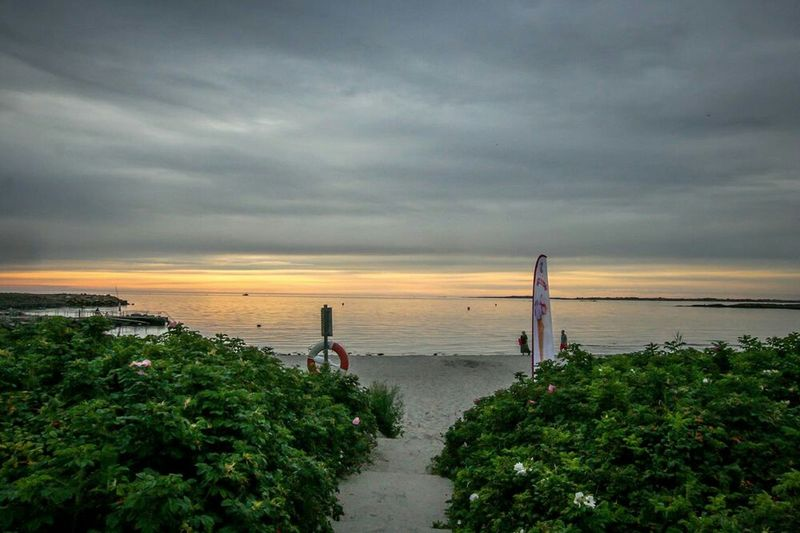 Still dream of that.. Hanging Out Check This Out Varberg Sunset Beach Eye4photography  Sea_collection Enjoying Life Flowers,Plants & Garden Sea And Sky Ocean View Seaside Beach Photography