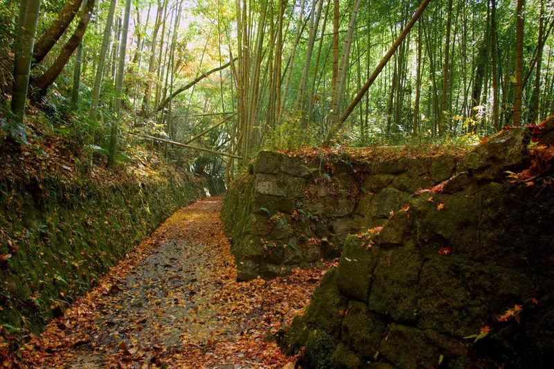 三重県伊賀市岩倉峡散策路