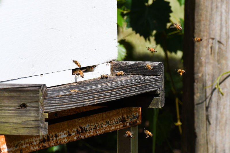 Bees Entering