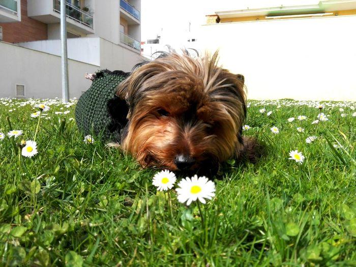 Pet Portraits Dog Flower Pets Grass Moon 🐕❤