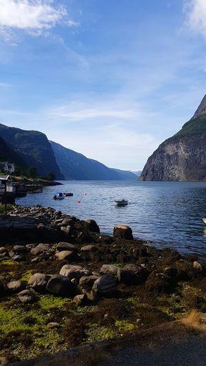Fjord Norwegian