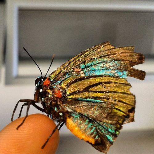 Una maricosita de todos los colores.... :P Colombia Nature Butterfly Beautifullife Beautiful Justtheway