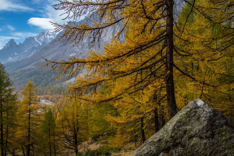 refuge bonatti,courmayeur,italy Tree Plant Autumn Beauty In Nature Scenics - Nature Forest Mountain Nature Land Environment Mountain Range Tranquil Scene No People Tranquility Day Rock Non-urban Scene Growth Branch Change Outdoors WoodLand Pine Tree Coniferous Tree Pine Woodland