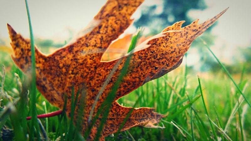 Morning rain day Enjoying The Rain Relaxing Falling Leaves Wet Grass Rain Storm Beautiful Nature