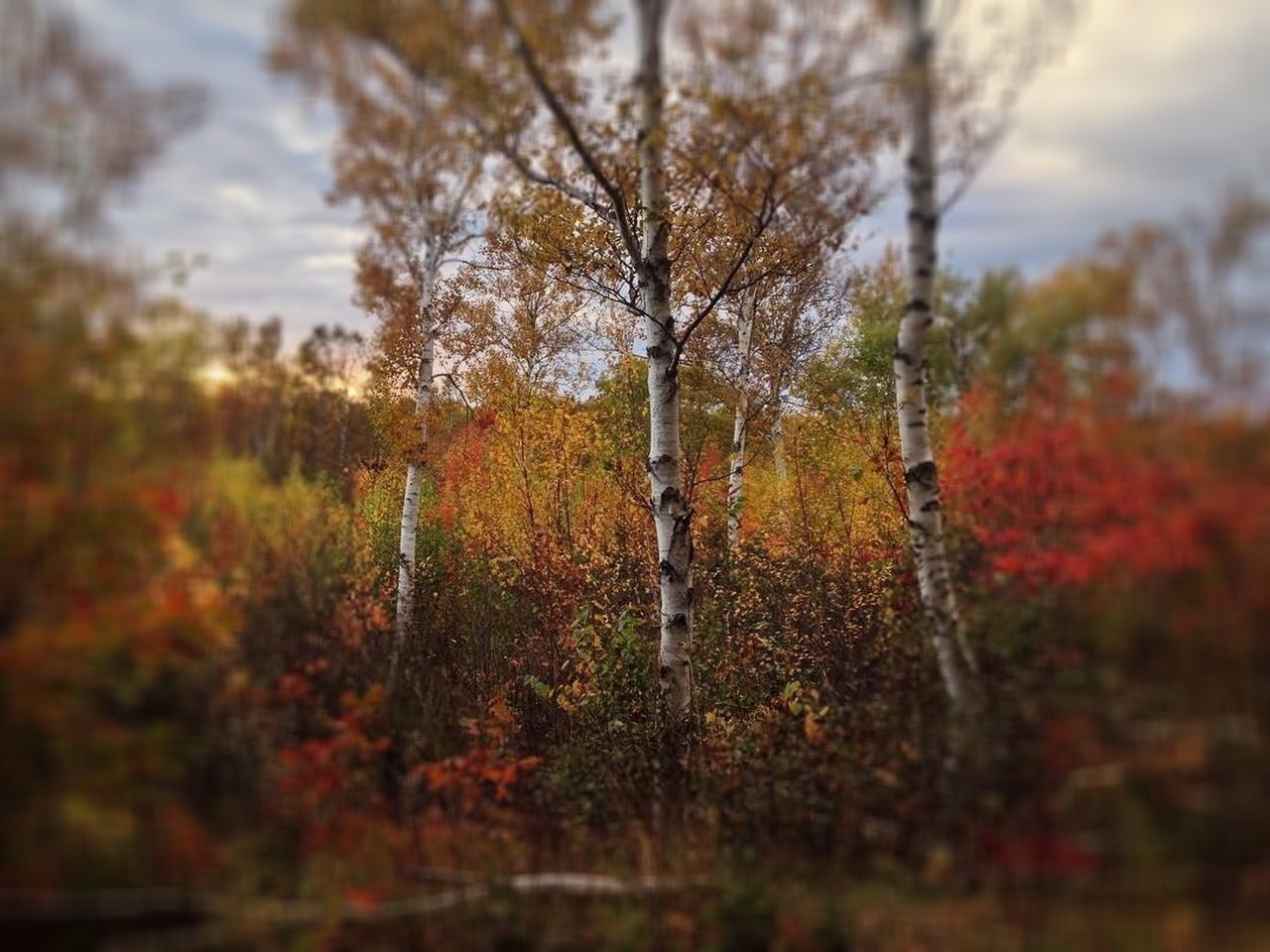 nature, autumn, tree, growth, beauty in nature, tranquility, outdoors, tranquil scene, day, change, no people, scenics, branch, sky
