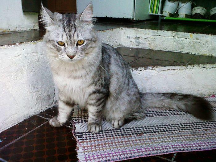 Cat♡ feline Catoftheday