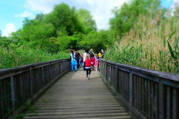 Real People Tree Growth Full Length Footbridge Bridge - Man Made Structure Day The Way Forward Rear View Leisure Activity Railing Togetherness Nature Greenpark London Walking Postcode Postcards