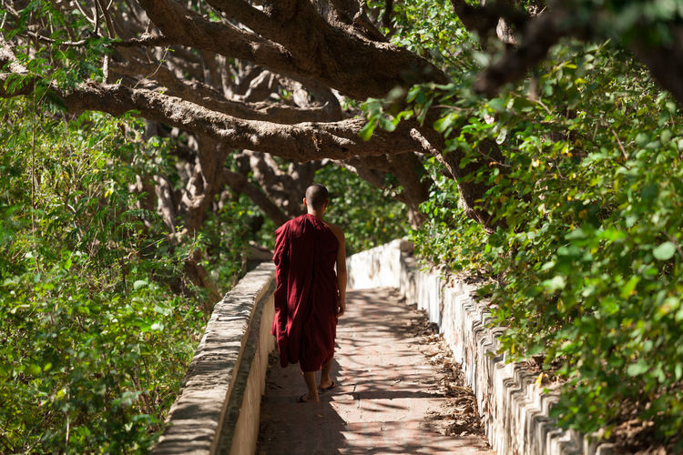 Rear View Of A Monk Walking In Forest