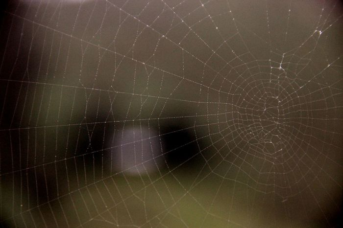 Backgrounds Astronomy Star - Space No People Night Textured  Nature Outdoors Close-up Galaxy Space Sky Spider Spiderweb Spider Nature_collection Eyenaturelover Spider Macro Spider Lily Spiderworld Spider Web Spiderweb In Morning Dew Nature Day Animals In The Wild