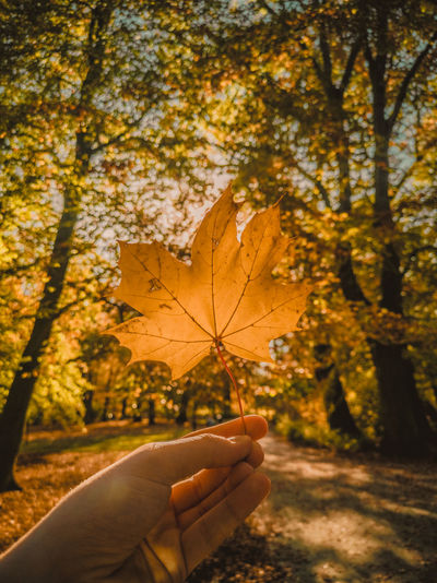 Cropped hand of person holding maple leaf during autumn