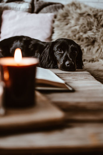Close-up portrait of dog resting against illuminated candle