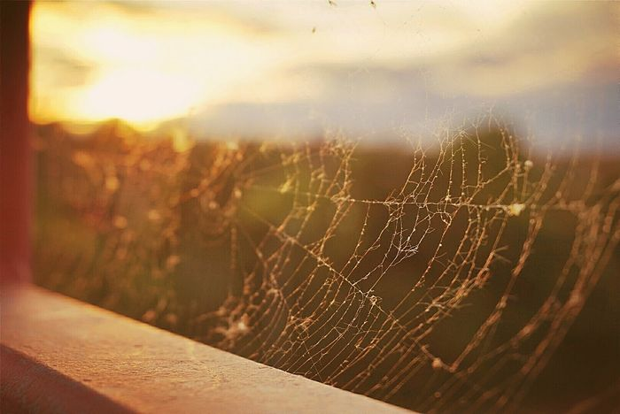Spiderweb Darkness And Light Lakeview Bridge View Bridge Sun Goes Down Colurs Of Nature Sunset Sunlight Beauty In Nature The Great Outdoors - 2017 EyeEm Awards Outdoor Pictures Street Live For The Story Place Of Heart The Street Photographer - 2017 EyeEm Awards Sommergefühle EyeEm Selects Breathing Space Perspectives On Nature The Still Life Photographer - 2018 EyeEm Awards