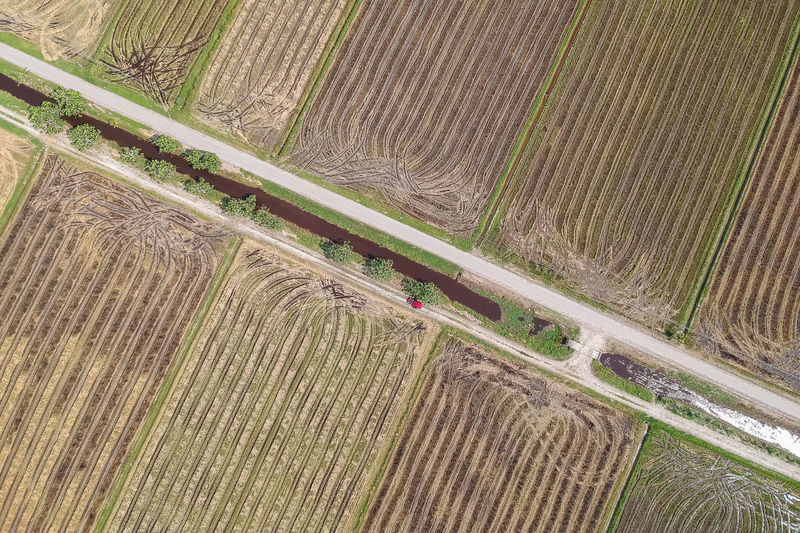 High Angle View No People Day Agriculture Plant Nature Landscape Land Field Pattern Environment Outdoors Rural Scene Farm Growth Road Transportation Grass Tree Beauty In Nature Parallel