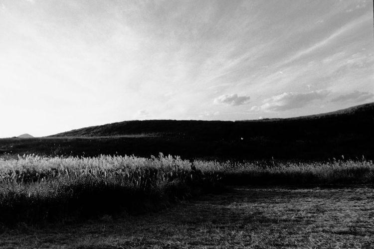 Acros100 モノクロフィルム ELMARIT-M 28mm F2.8 Blackandwhite BESSA-T EyeEm Best Shots EyeEm Nature Lover Nature_collection Naturelovers Nature