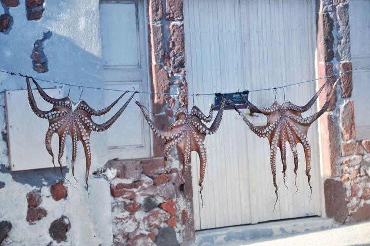 Greece Cyclades Mykonos Mykonos,Greece Wanderlust Octopus Islandhopping