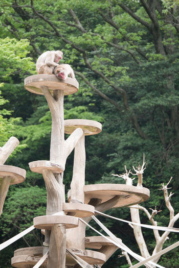 Animal Animal Themes Animals Contryside Day Macaca Mammal Monkey Nihon-zaru No People Outdoors Tree Zoo