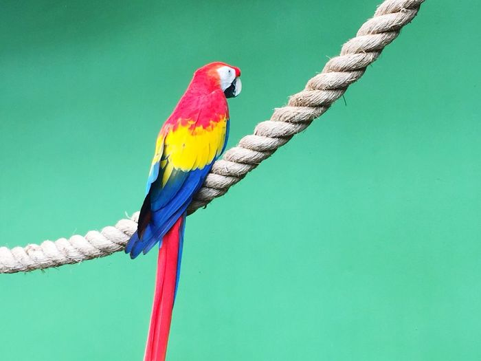 Colourful Bird Parrot Bird Perching Multi Colored Red Animals In The Wild Scarlet Macaw Animal Wildlife Nature Outdoors Day
