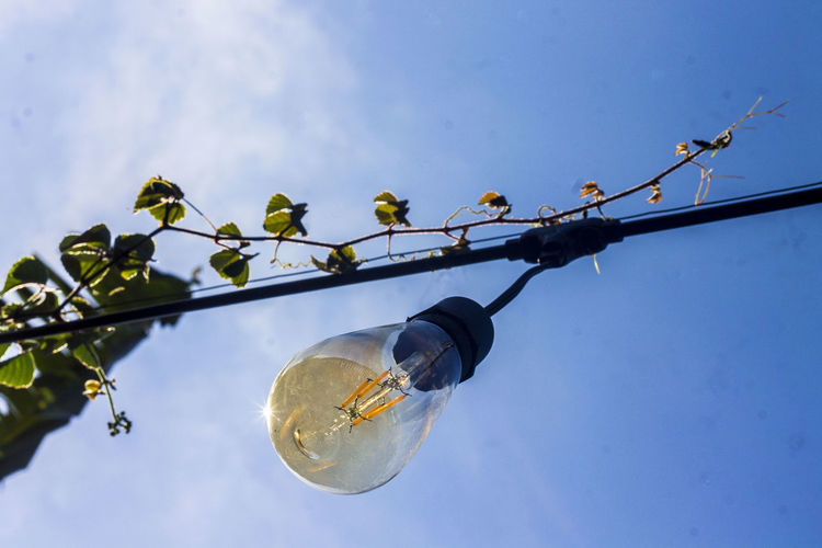 Low angle view of light bulbs hanging on tree against sky