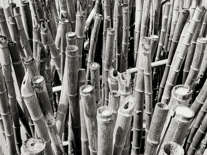 High angle view of bamboo for sale