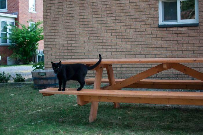 Jasper & Jasper's picnic table. Pets Dog Domestic Animals One Animal Animal Themes Mammal Outdoors Building Exterior Built Structure No People Day Architecture Full Length Cat Cultivate Ypsi