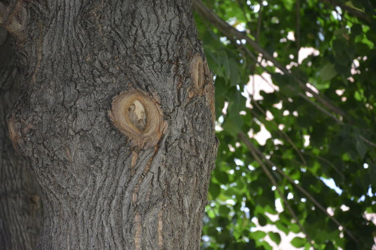 Backgrounds Bark Beauty In Nature Close-up Colour Of Life Day Detail Focus On Foreground Growth Hole Natural Pattern Nature No People Outdoors Part Of Selective Focus Textured  Tranquility Tree Tree Trunk Wood - Material