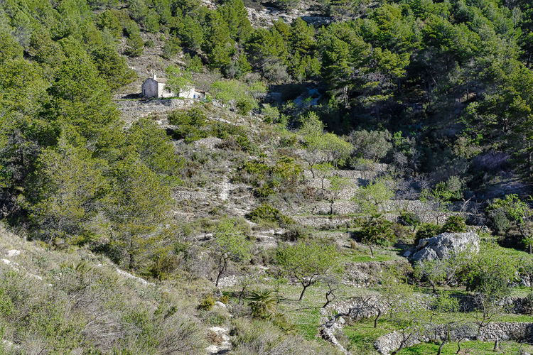 Altea, Spain Mountainside Orchard Beauty In Nature Day Growth Nature No People Outdoors Plant Scenics Tranquil Scene Tranquility Tree Mountain