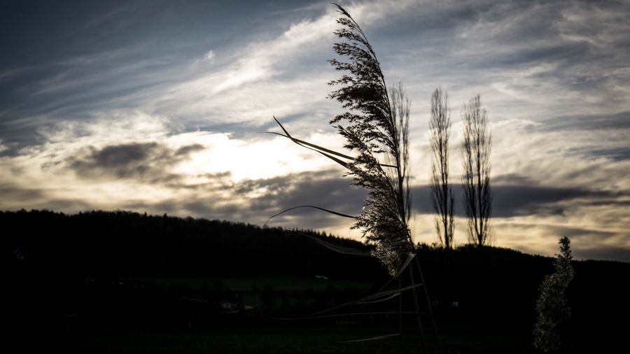 Winter Tübingen SEL90M28G Sony A6000 No People Landscape Plant Field Outdoors Scenics Sunset Tree Grass Rural Scene Day Shades Of Winter Colour Your Horizn