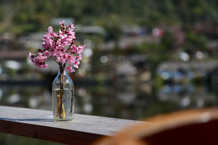 Close-up of flowers in bottle on railing