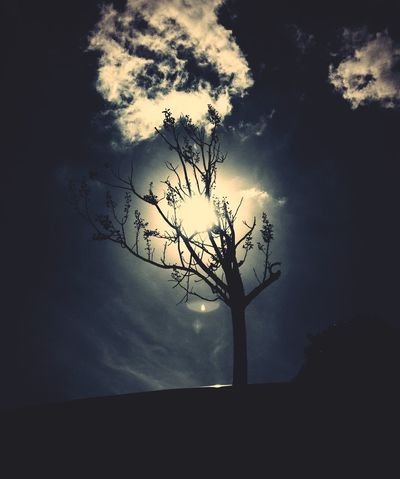 Light of Mine Light And Shadow Tree Clouds And Sky Zen