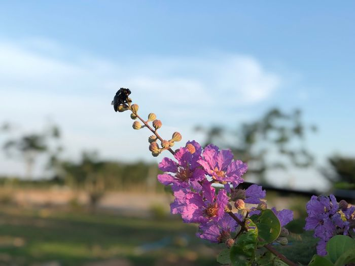 A Wasp on the purple flowers blue sky scenery Flowering Plant Flower Plant Fragility Freshness Vulnerability  Growth Beauty In Nature Sky Focus On Foreground Close-up Nature Day Flower Head Purple Inflorescence No People Petal Botany Field