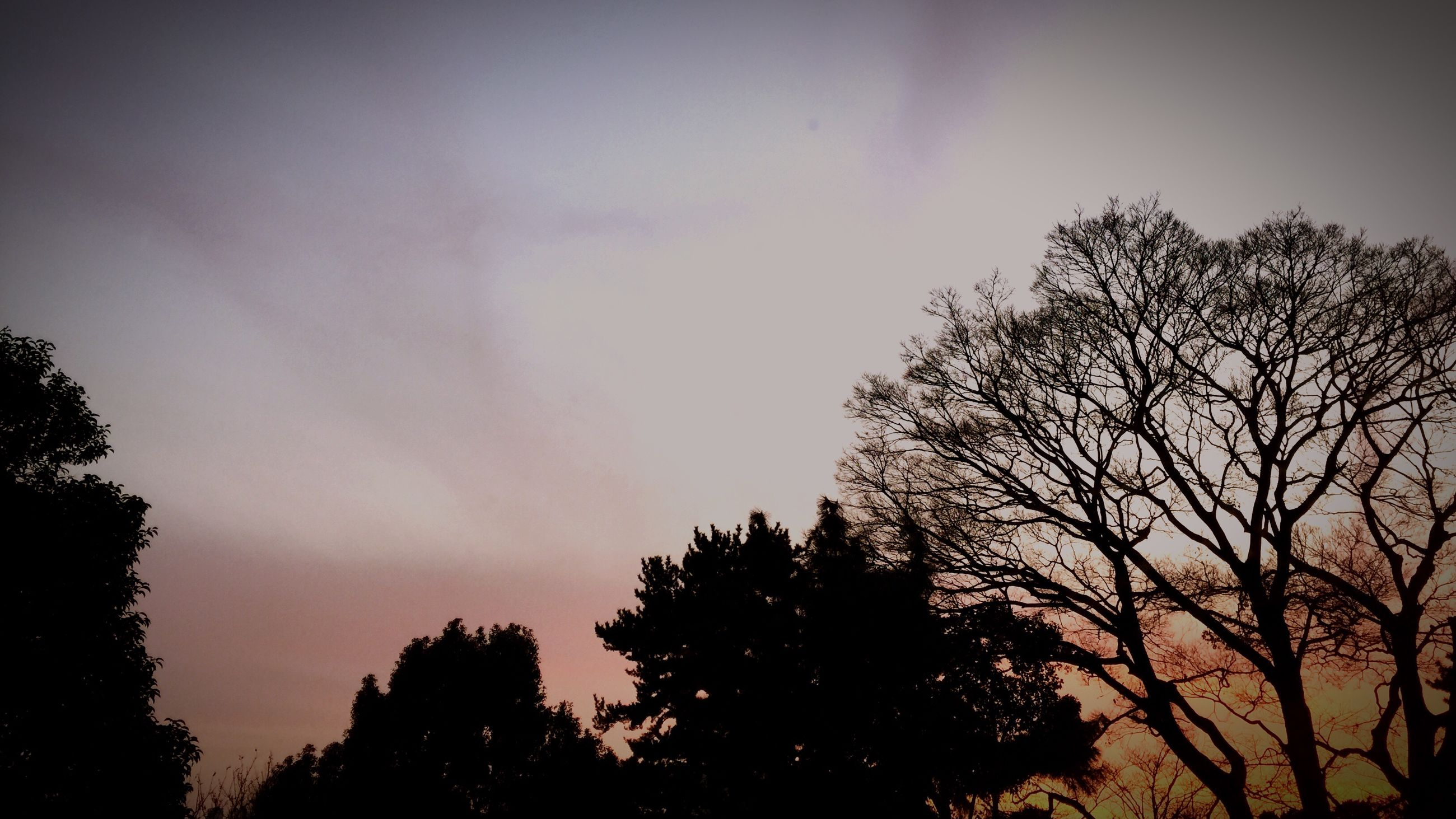 tree, sunset, silhouette, nature, sky, beauty in nature, no people, growth, outdoors, day