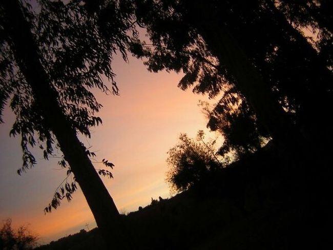 Sunset Atardecer Ovalle