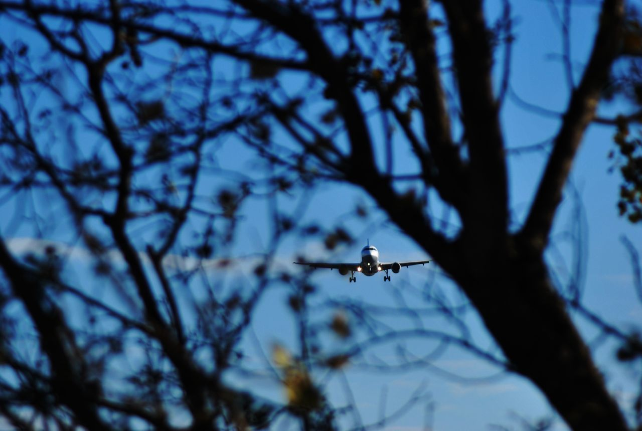 Low Angle View Of Airplane Flying In Mid-Air Seen Through Branch