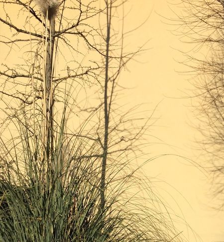 Day Nature Grass Bare Tree No People Branch Sunset Beauty In Nature Growth Plant Outdoors Scenics Tree Sky Timothy Grass Close-up