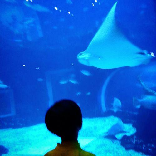 Aquarium Sight Seeing EyeEm Best Shots Taking Photos