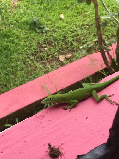 Lizard Outdoors Nature No People Close-up